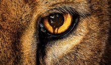 When Does Zoo Season 2 Start? Premiere Date
