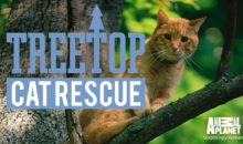 When Does Treetop Cat Rescue Season 2 Start? Release Date (Cancelled)