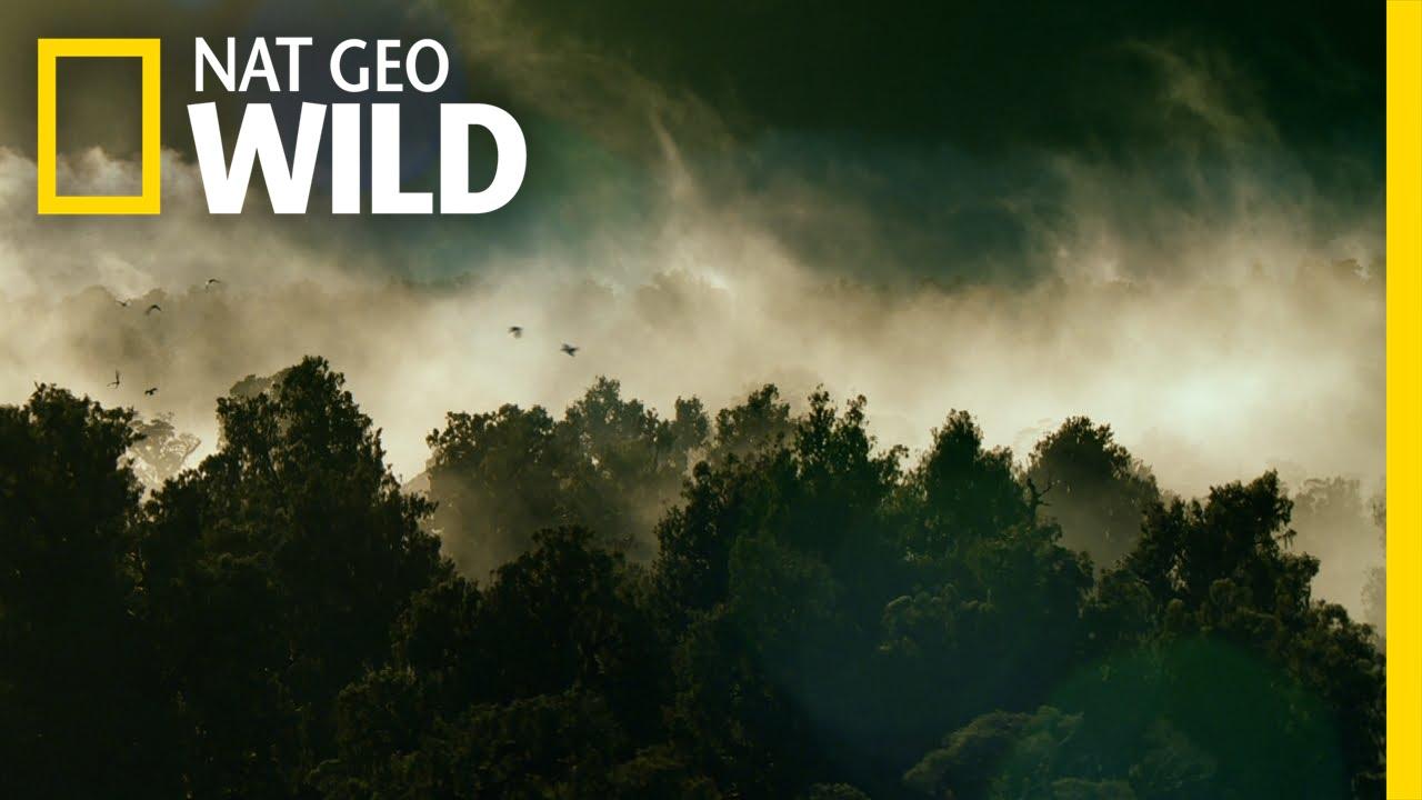 When Nature Calls Season 2 Release Date On Nat Geo Wild