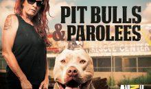 Pit Bulls & Parolees Season 14 Release Date on Animal Planet