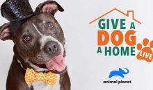 Give a Dog a Home Live! Release Date on Animal Planet (Premiere Date)